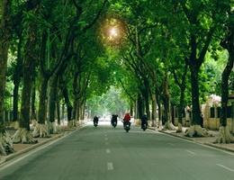 Tiếng ve gọi hè Trang Thư, Triệu Vy - Trịnh Công Sơn