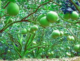 Vườn cây của ba karaoke beat Xuân Mai, Bảo An, Thu Thủy